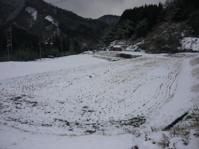 冬場の田んぼ