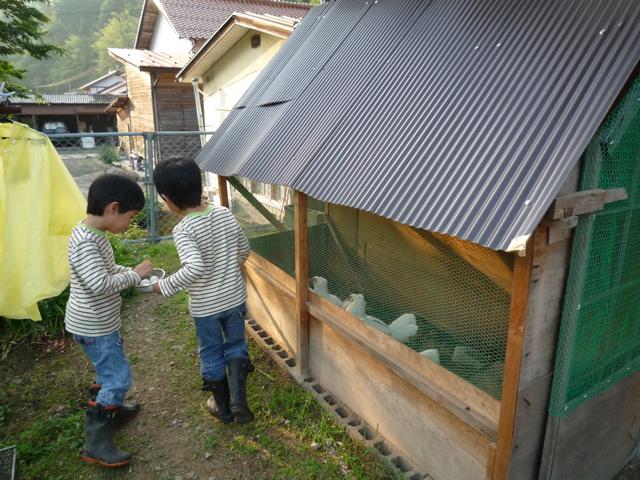 肥料と卵をうみだしてくれるニワトリ達